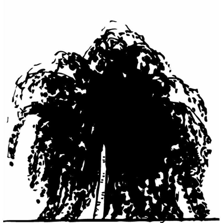 Sørgebirk