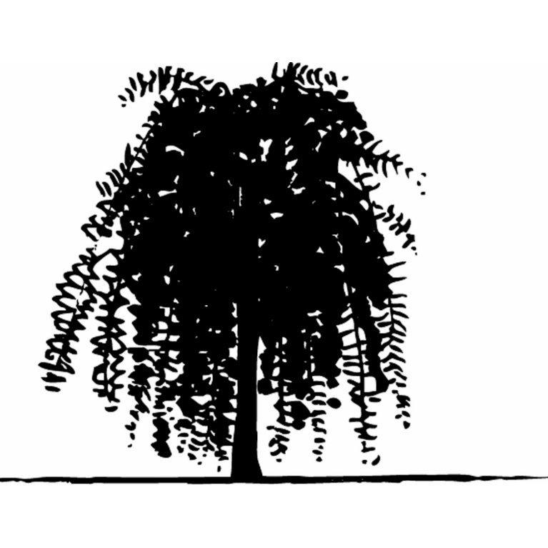 Sibirisk ærtetræ