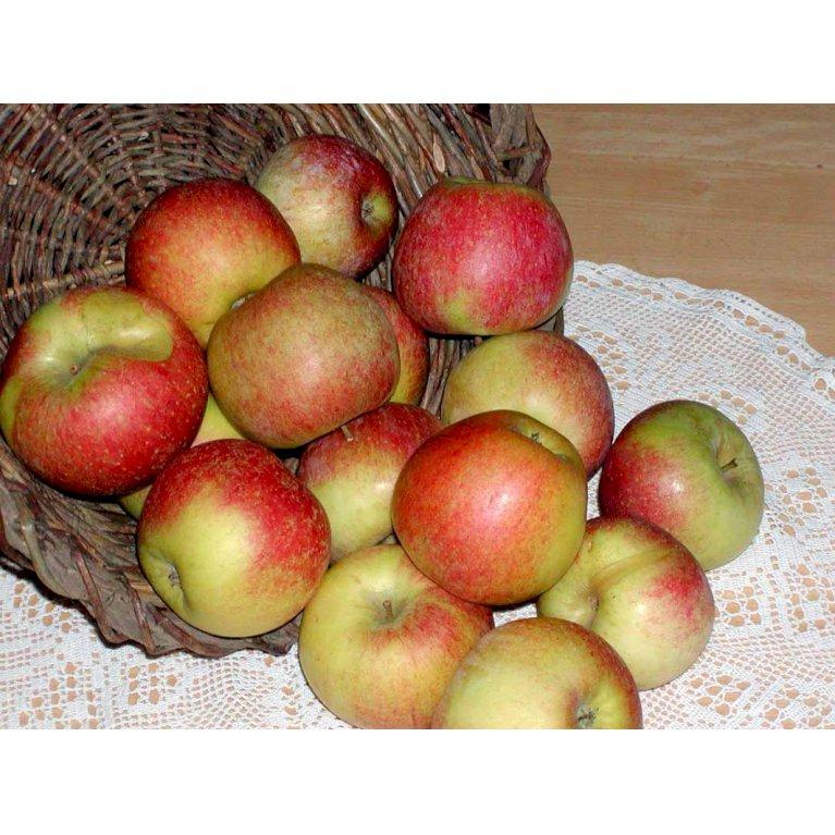 Æble 'Aroma'