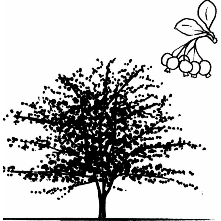 Hanesporetjørn