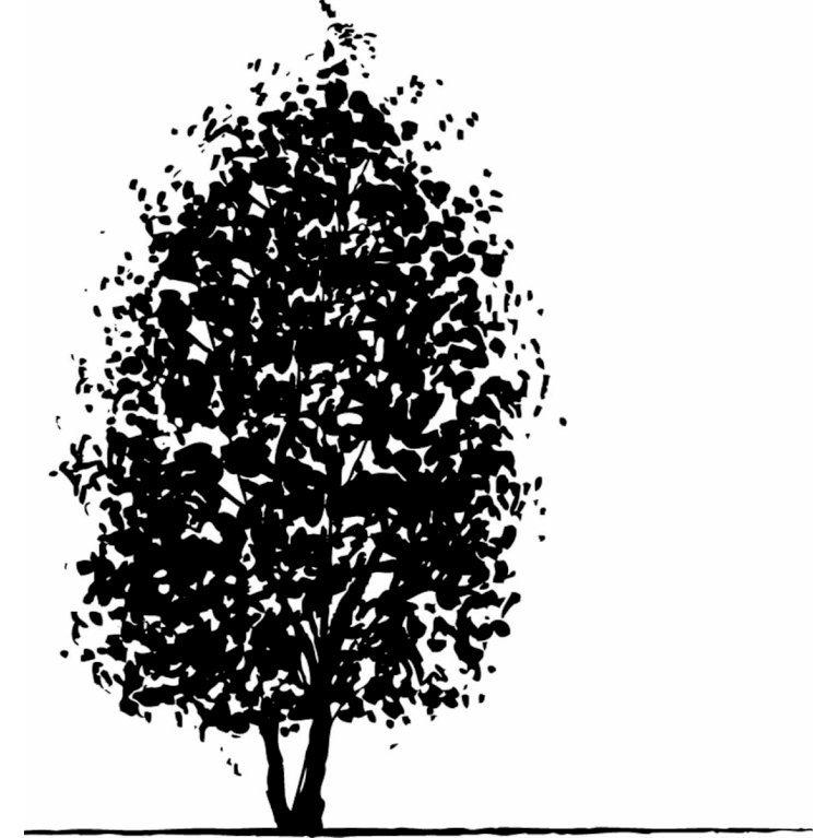 Duetræ