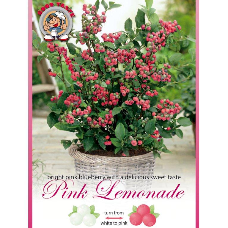 Lyserød blåbær  'Pink Lemonade'