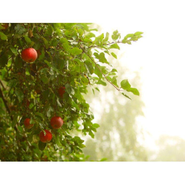Frugtpakker til naturen