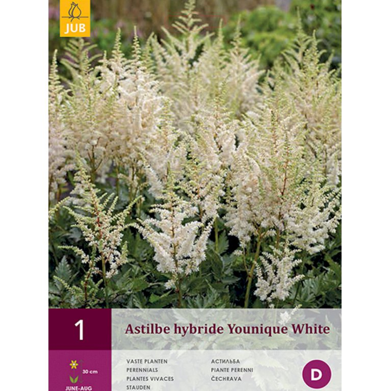 Astilbe 'Younique White' (nr. 161)