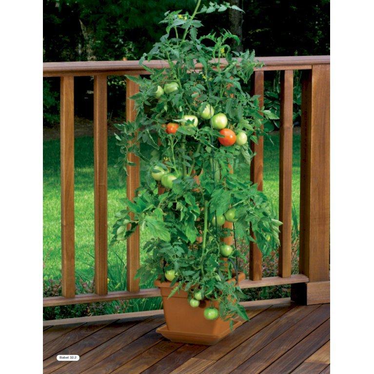 Babel - Komplet tomatkrukke