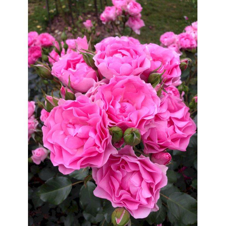 I am grateful™ Plant'n'relax®