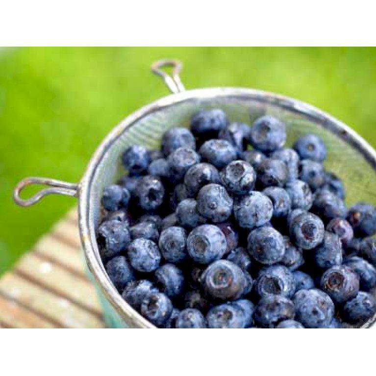 Amerikanske Blåbær 'Brigitta Blue'