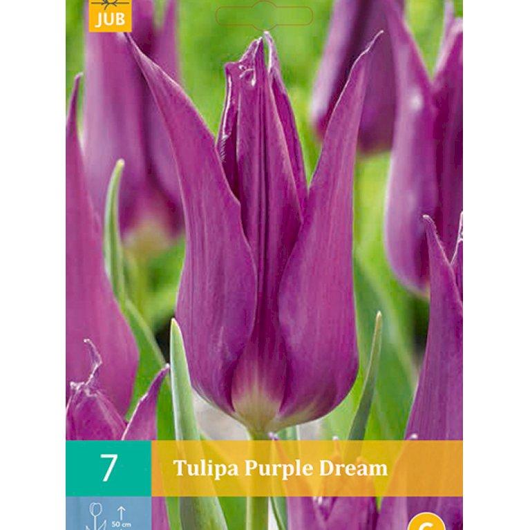 Liljeblomstrende tulipaner 'Purple dream' (nr. E66)