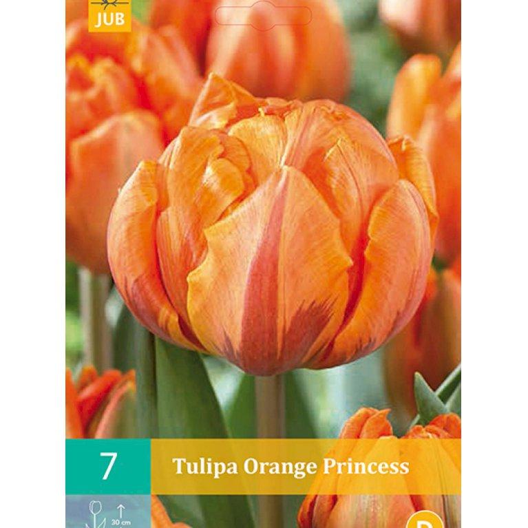 Tulipan, dobbelt sen 'Orange Princess' (nr. E82)