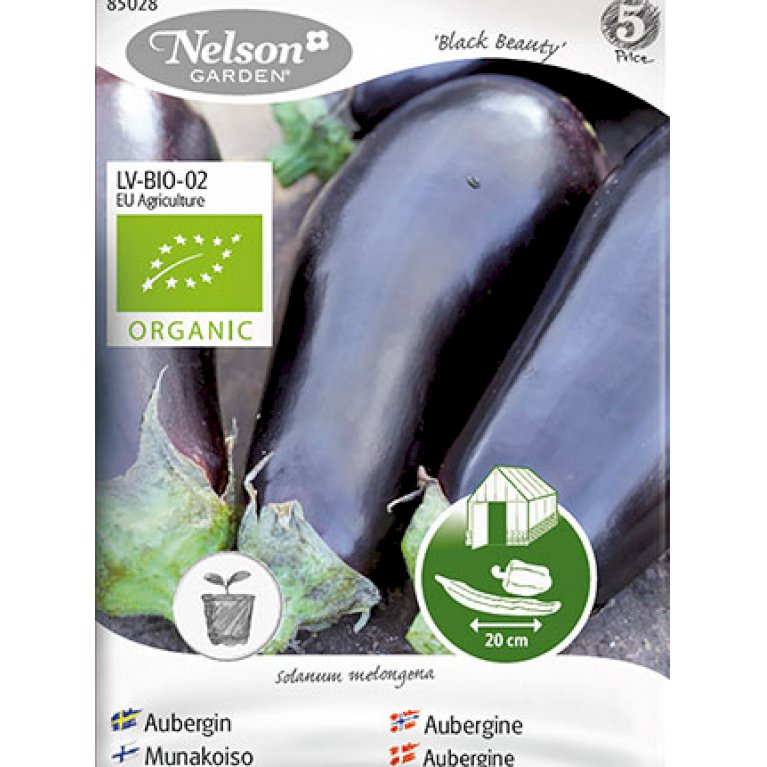 Aubergine, Black Beauty, Organic
