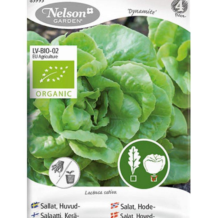 Salat, Hoved-, Matilda, Organic