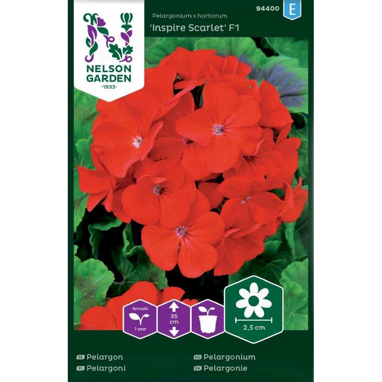 Pelargonie, Inspire Scarlet F1, rød