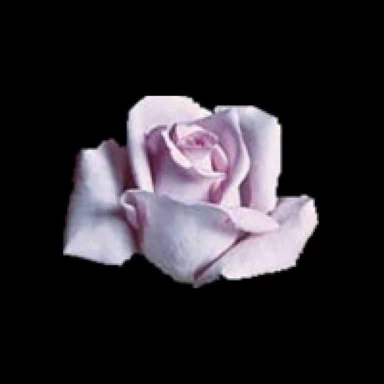 Storblomstrende Rose 'Mainzer Fastnacht'