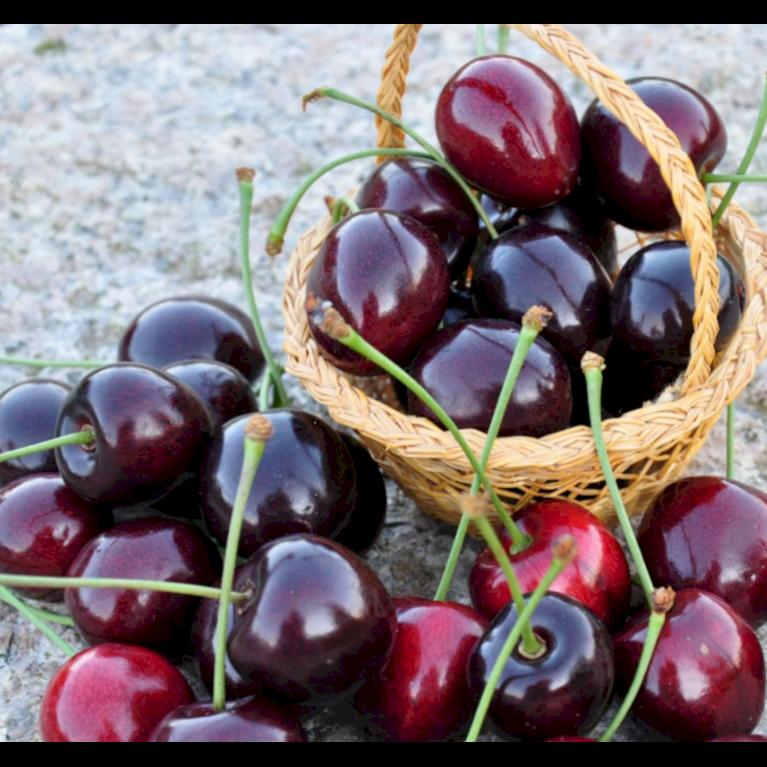 Sød Kirsebær 'Kordia' - kræver bestøver