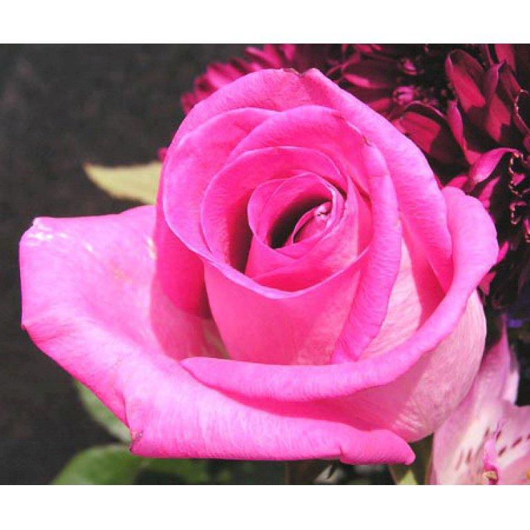 Buketrose 'Bella Rosa'