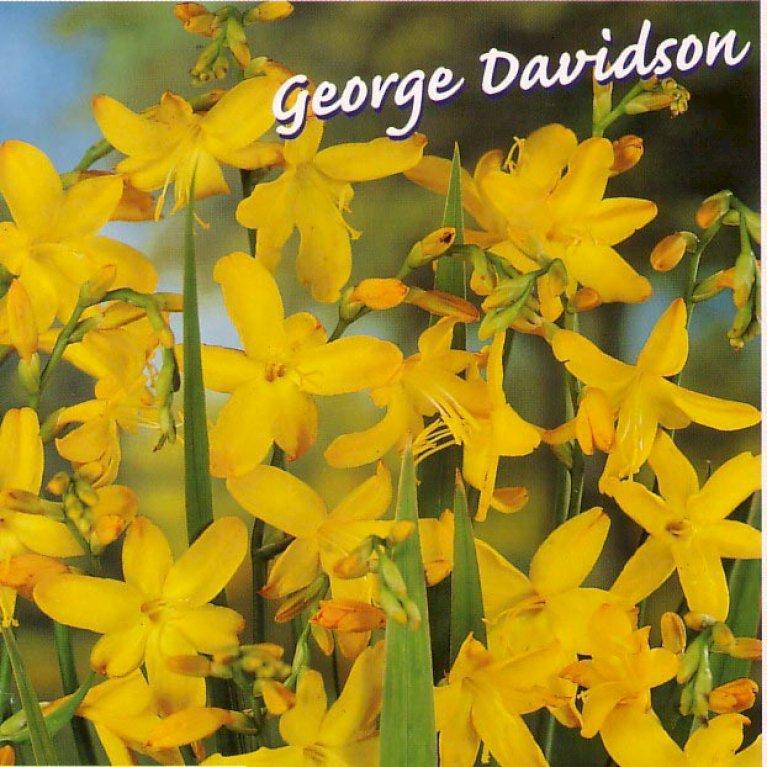 Crocosmia 'George Davidson'