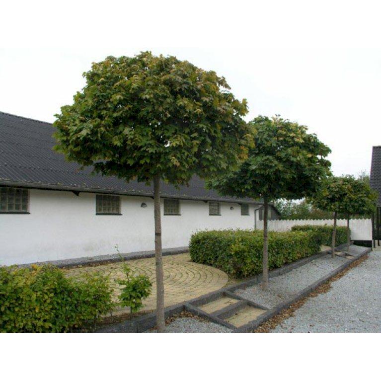 Kugleløn / Kugleahorn
