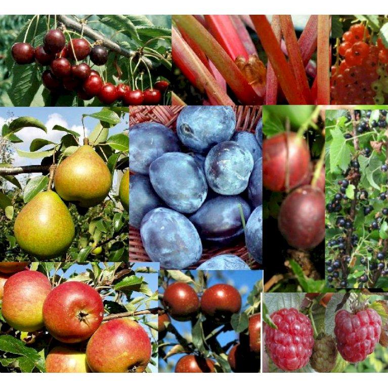 Mormors frugtpakke