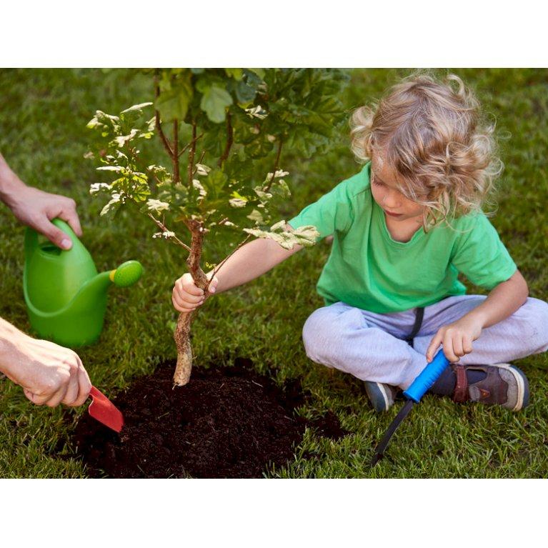 Muld til plantning af træer