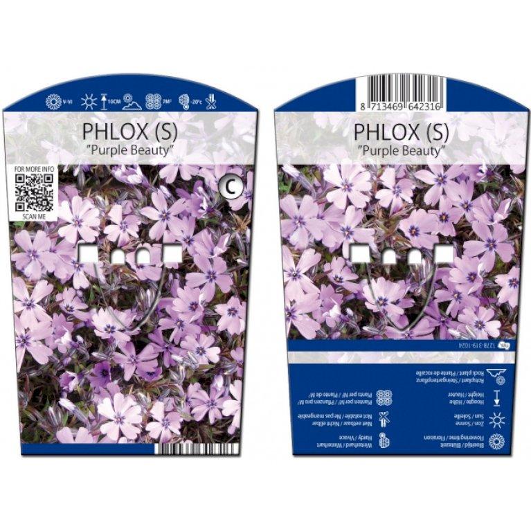 Lyngfloks 'Purple Beauty'