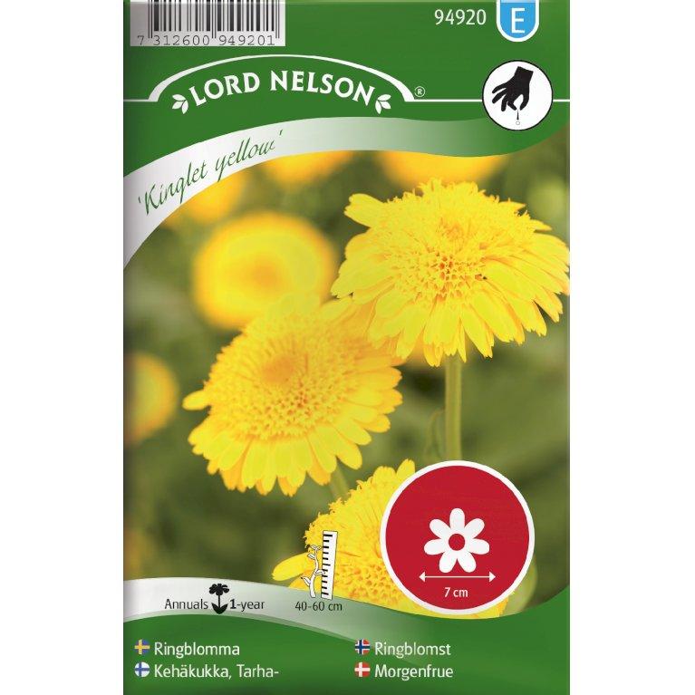 Morgenfrue, Have, Kinglet Yellow