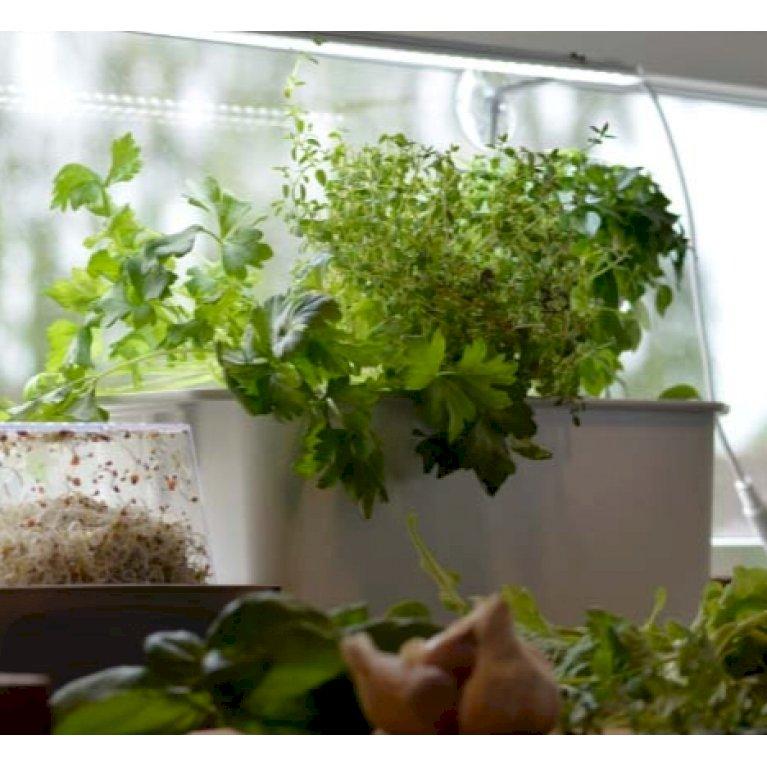 Harvy til hydroponisk dyrkning