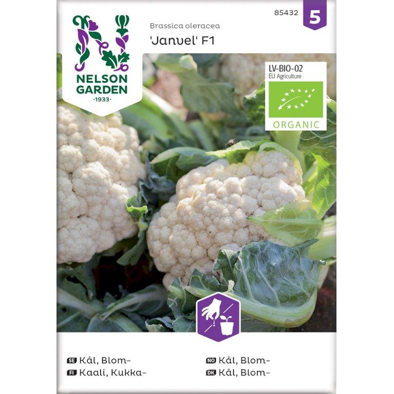 Kål, Blom-, Janvel F1, Organic