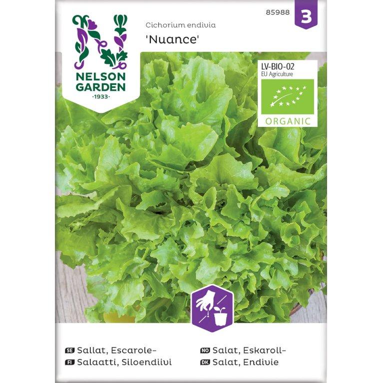 Salat, Endivie bredbladet