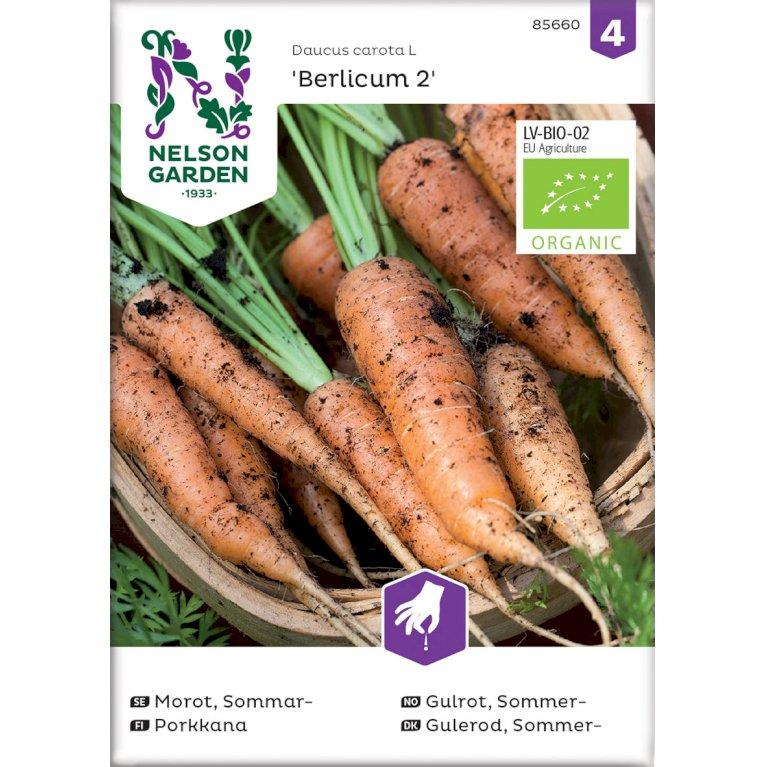 Gulerod, Sommer-, Berlicum 2, Organic