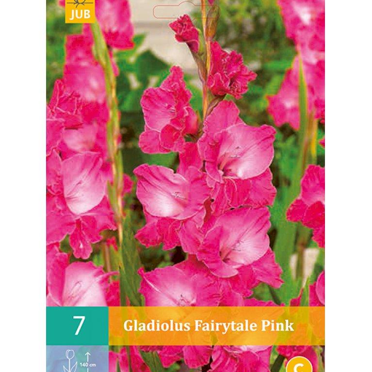 Gladiolus Fairytale Pink