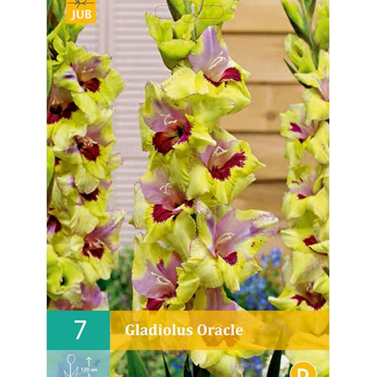 Gladiolus Oracle