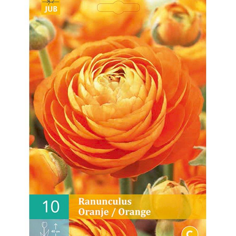 Ranunkel Orange