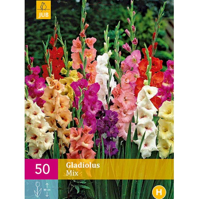 Gladiolus Mix