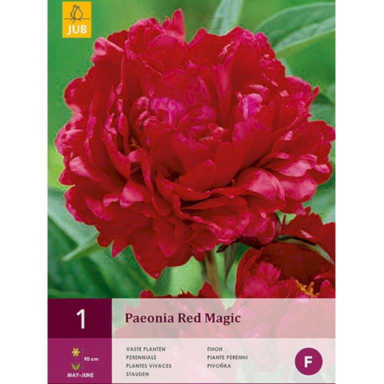 Paeonia Red Magic