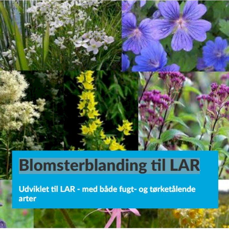 Blomsterblanding til LAR