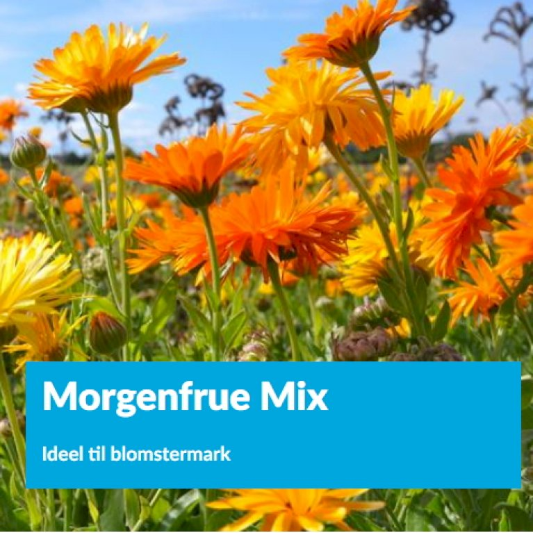Morgenfrue Mix