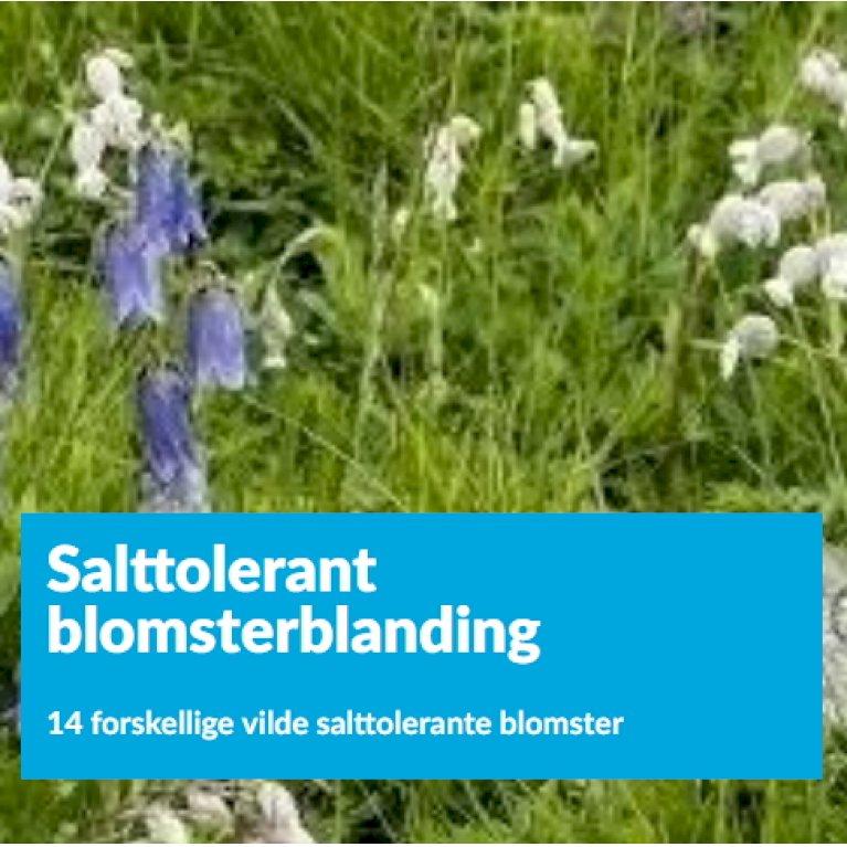 Salttolerant blomsterblanding