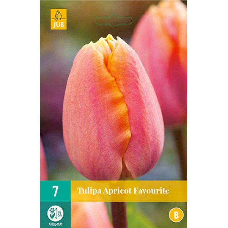 Tulips Apricot Favourite