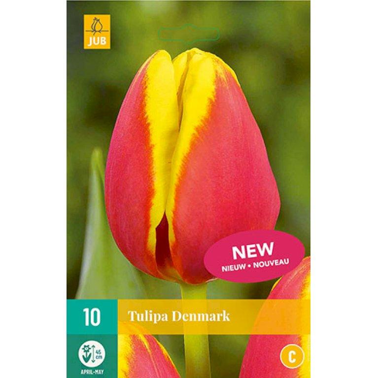 Tulips Denmark