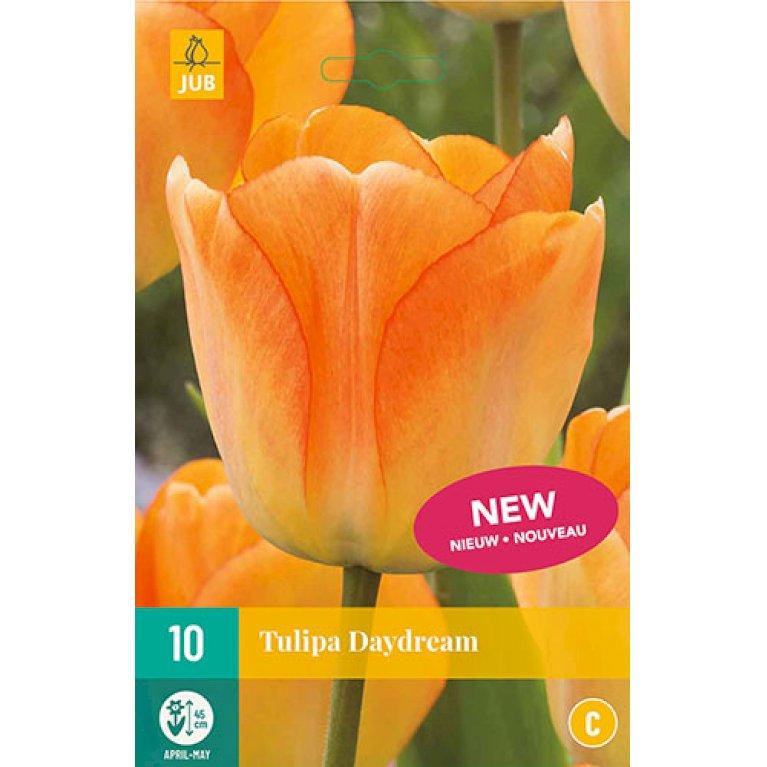 Tulips Daydream