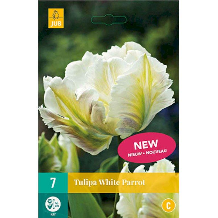 Tulipan 'White Parrot'