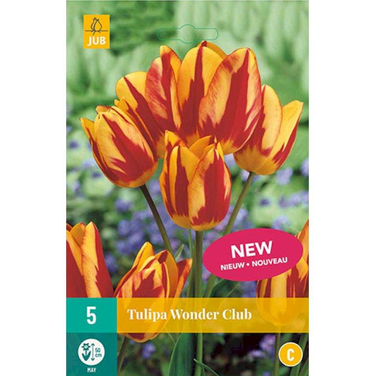 Tulips Wonder Club