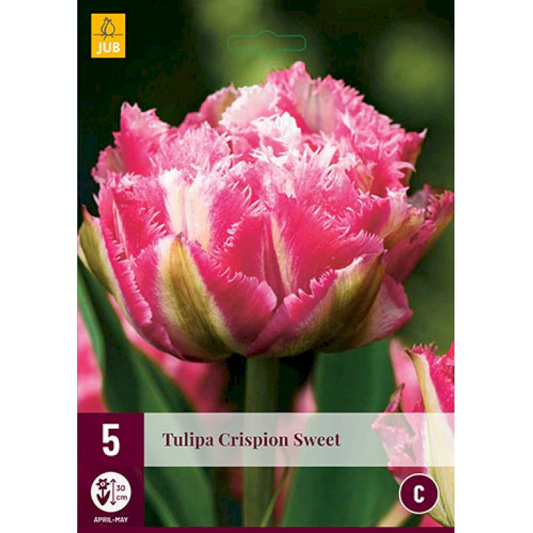 Tulips Tropical Wave