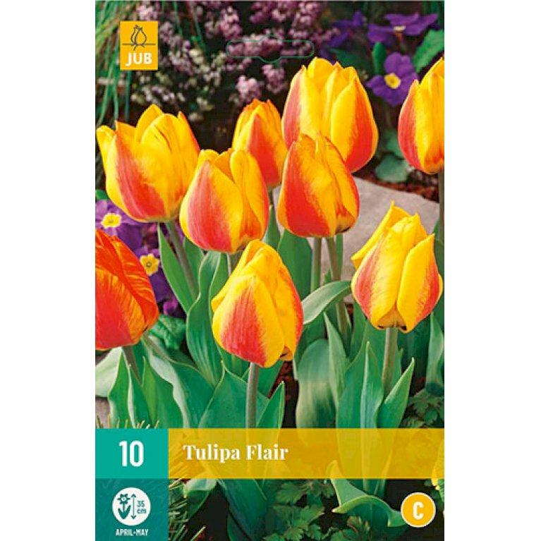 Tulips Flair