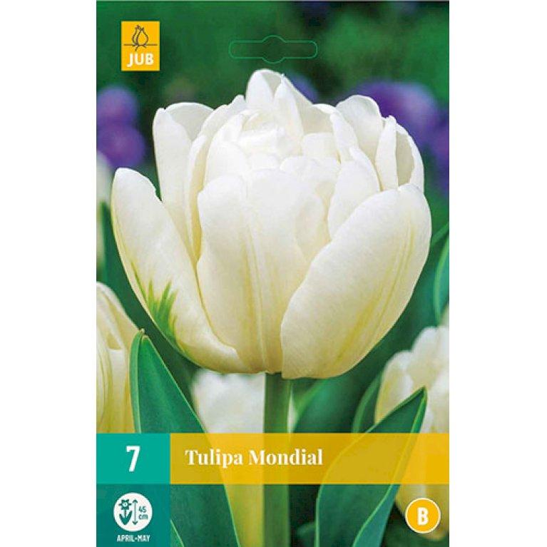 Tulips Mondial