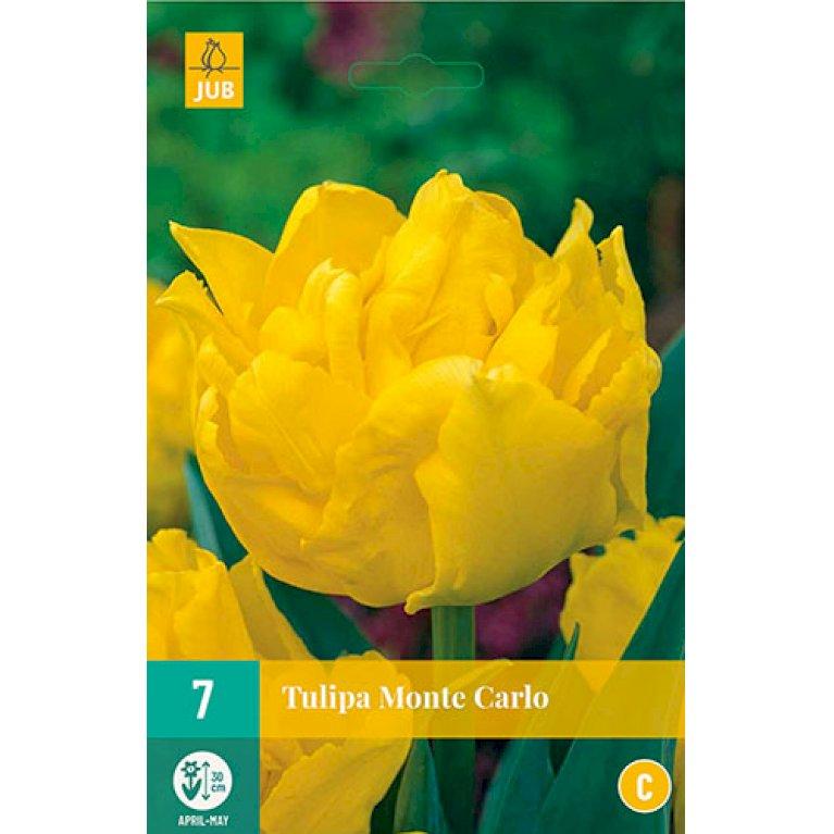 Tulips Monte Carlo