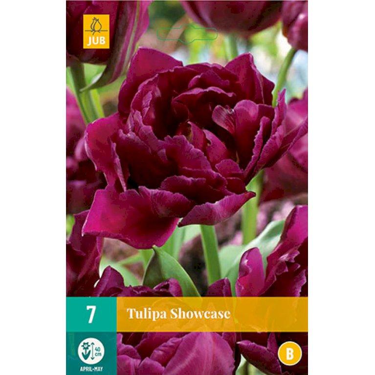 Tulips Showcase