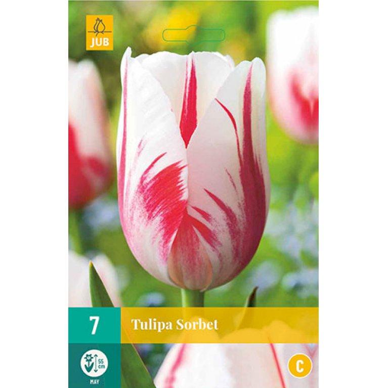 Tulips Sorbet