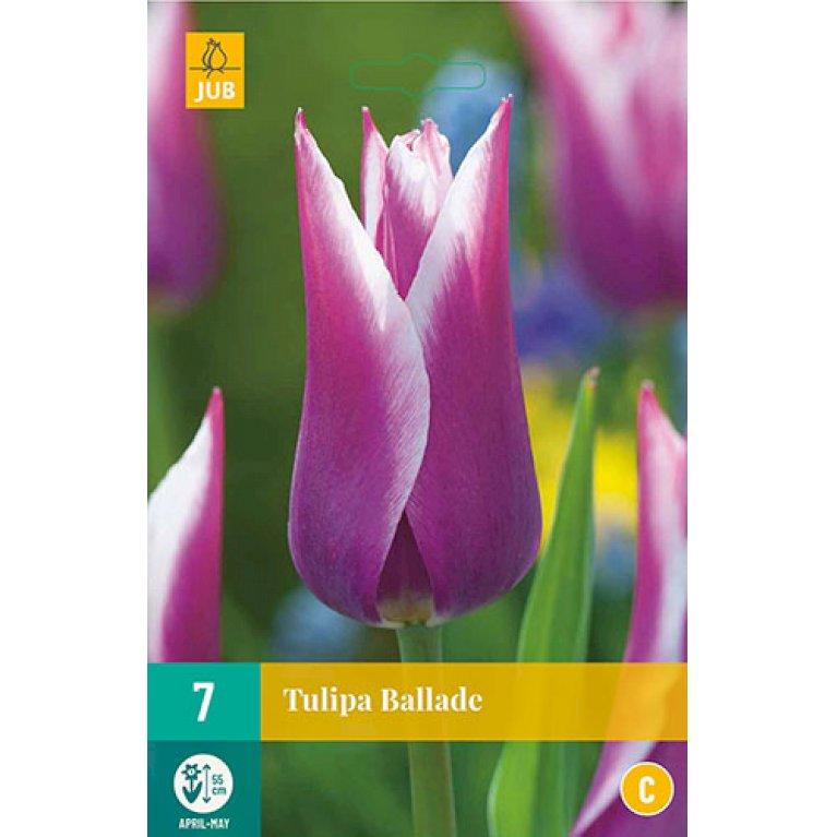 Tulips Ballade