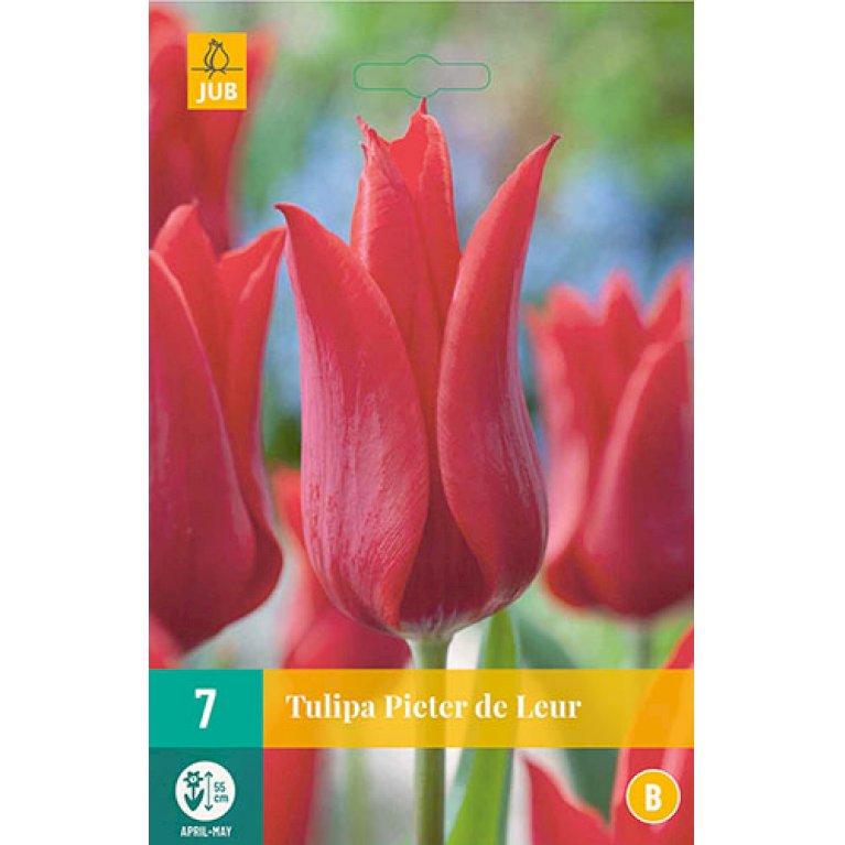 Tulips Pieter De Leur